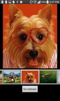 Funny HD Wallpapers apk screenshot