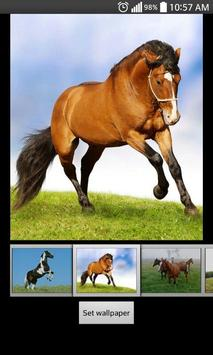 Horse HD  Wallpapers screenshot 1