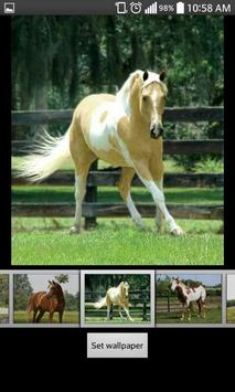Horse HD  Wallpapers screenshot 3