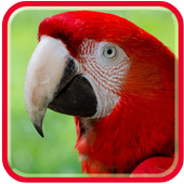Parrots  HD Wallpapers icon