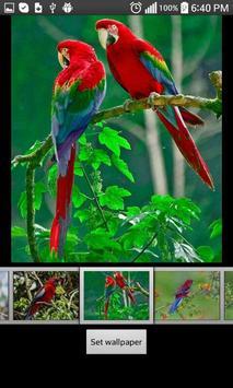 Parrots  HD Wallpapers screenshot 3