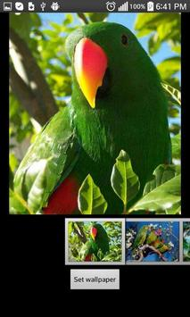 Parrots  HD Wallpapers poster