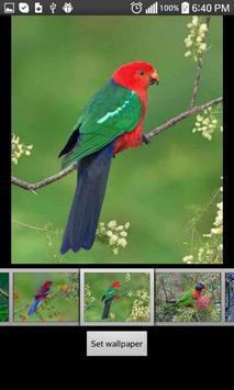 Parrots  HD Wallpapers screenshot 1
