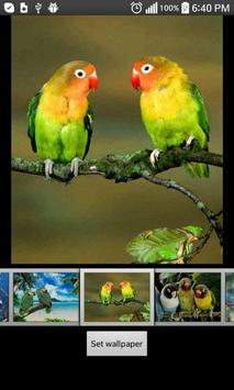 Parrots  HD Wallpapers screenshot 2