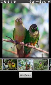 Parrots  HD Wallpapers screenshot 4