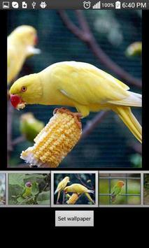 Parrots  HD Wallpapers screenshot 5