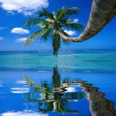 Coconut Tree on the Beach LWP icon