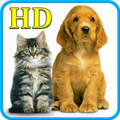 Cats and Dogs Wallpapers HD icon
