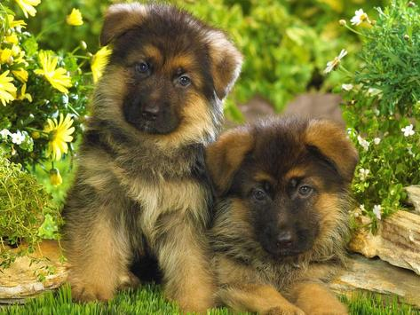 Cats and Dogs Wallpapers HD screenshot 4