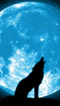 Cats and Dogs Wallpapers HD screenshot 5