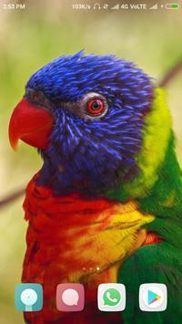 Amazing Birds Wallpapers screenshot 1