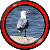 Seagull Live Wallpapers icon
