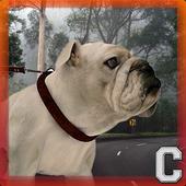 Bulldog Simulator icon