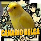 CANARIO BELGA CAMPAINHA LUTEUS icon