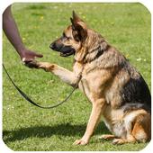 Como Educar a un Perro icon