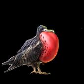 The Antigua Guardian icon