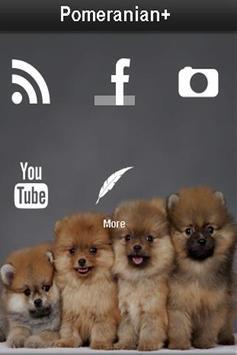 Pomeranian+ poster