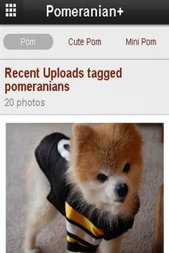 Pomeranian+ apk screenshot