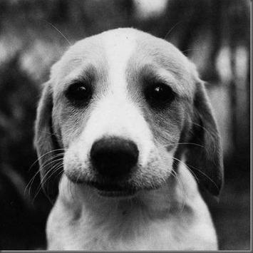 Dog Finder - Adopt A Puppy poster
