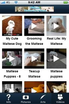 Maltese! screenshot 3