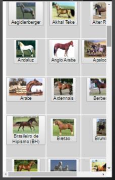 Cavalos - ConteudoAnimal.com.br screenshot 1