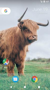 Cow Wallpapers apk screenshot