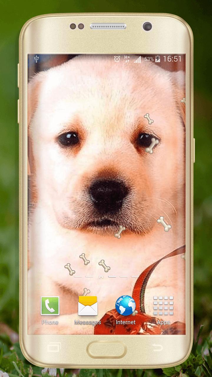 Android 用の 犬の壁紙無料 Apk をダウンロード