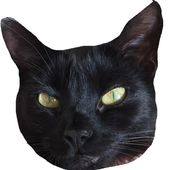 Yin Yang Cats (Unreleased) icon