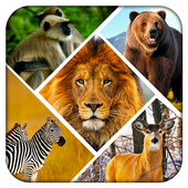 Wild Safari Quick Snapshot 3D icon