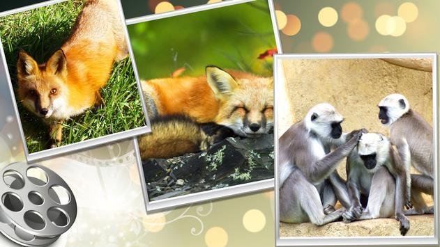 Wild Safari Quick Snapshot 3D screenshot 15