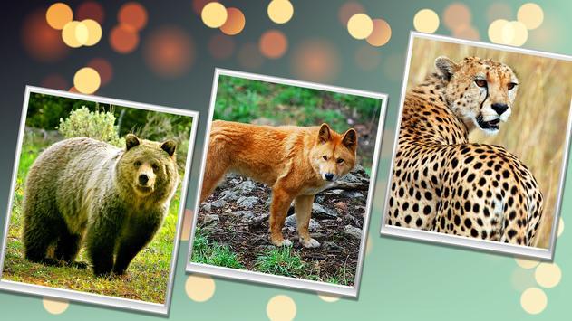 Wild Safari Quick Snapshot 3D screenshot 9