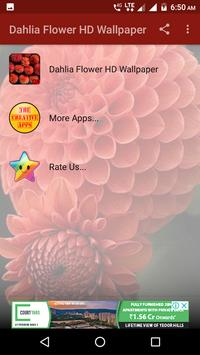 Dahlia Flower HD Wallpaper screenshot 8