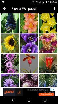 Flower Wallpaper screenshot 18