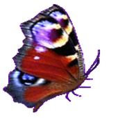 Flappy Butterfly icon