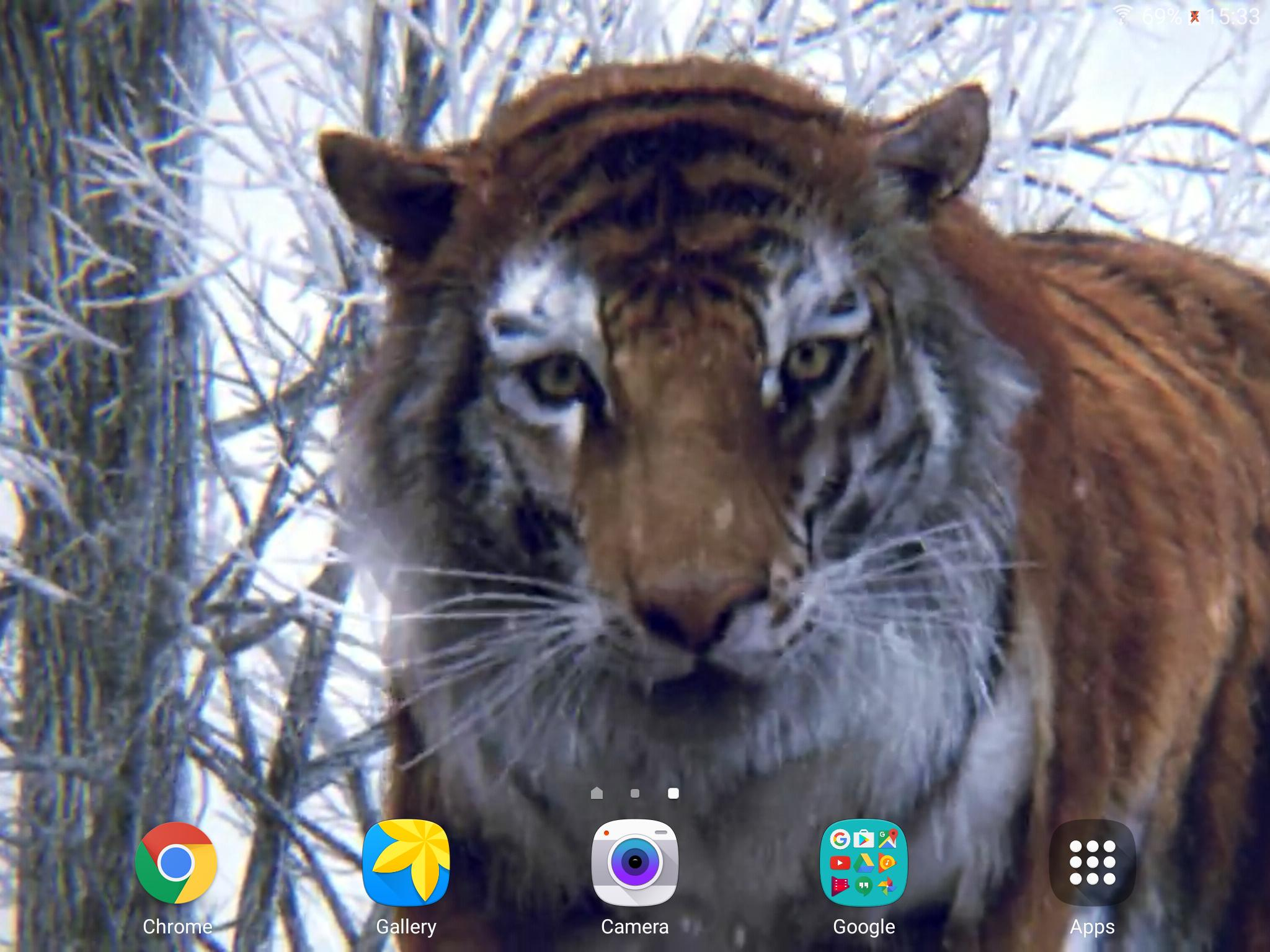 Tiger 3D Live Wallpaper for Android ...
