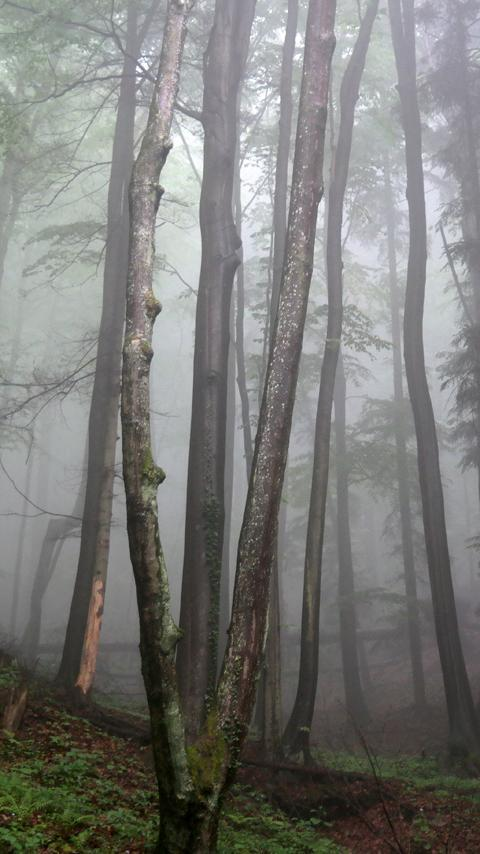 Creepy Forest Wallpaper For Android Apk Download
