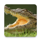 Crocs In Space icon