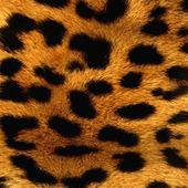 crystal leopard wallpaper icon
