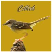 Kicau Ciblek icon