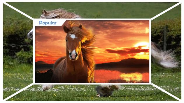 Horses Live Wallpaper HD apk screenshot