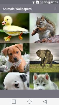Animals Wallpapers poster