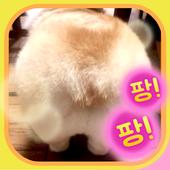 동물뒷모습퀴즈 icon