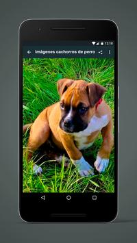 Images puppies of dog poster