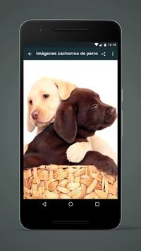 Images puppies of dog apk screenshot