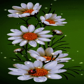 White Flowers Beauty LWP icon