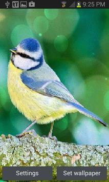 Yellow Blue Bird LWP poster