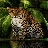 Angry Forest Leopard LWP icon