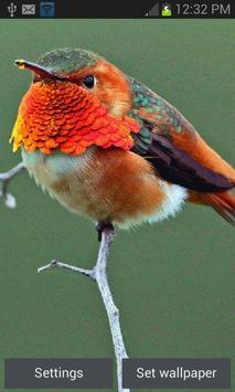 Beautiful Bird Live Wallpaper poster