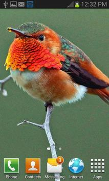 Beautiful Bird Live Wallpaper apk screenshot