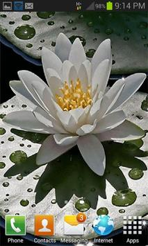 Beautiful Lotus Live Wallpaper screenshot 2